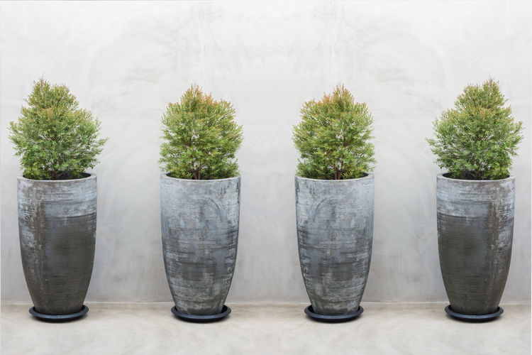 Row Of Potted Plants Against White Background
