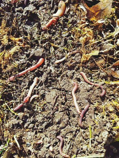 Dirt Grass Ground Worm Worms Earthworm Earthworms Full Frame Outdoors Sand Day Backgrounds Beach No People Close-up Nature High Angle View Low Section Animal Themes