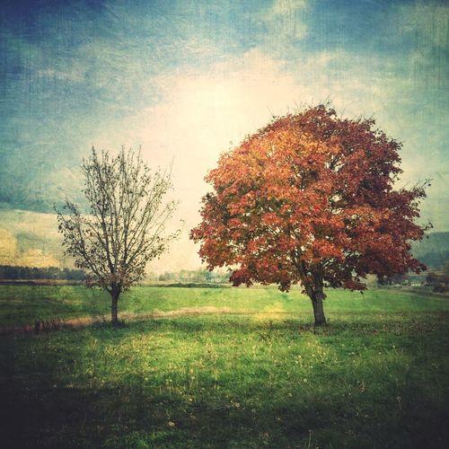 Sauvie's Island NEM Memories NEM Painterly IPhoneArtism TreePorn