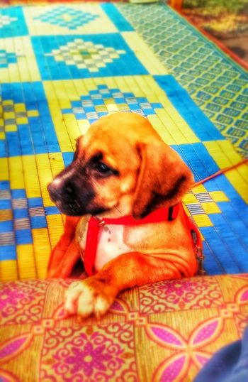 I Love My Dog Pitbull♥ Dead