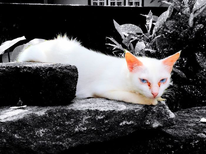Cat look into my eyes Sandy06photography Cat Blackandwhite IPhoneography Likeforlike