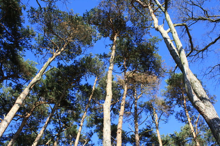 In The Forest Beautiful Nature Clear Sky Trees TreePorn Forest Naturelover Background Look Up And See Beauty Look Up The Sky Patterns In Nature
