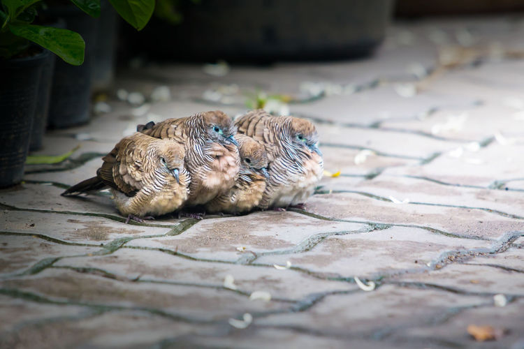 Close-up of a bird on a footpath