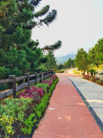 taman saujana hijau Malaysia Scenery Purple Flower Dlower Garden Flowerbed Garden Park Taman Saujana Hijau Tree The Way Forward Diminishing Perspective Flower Nature Plant Growth No People Freshness Sky Day Outdoors Road Beauty In Nature Clear Sky