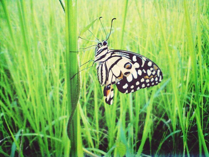 Taking Photos Hello World Butterfly Field