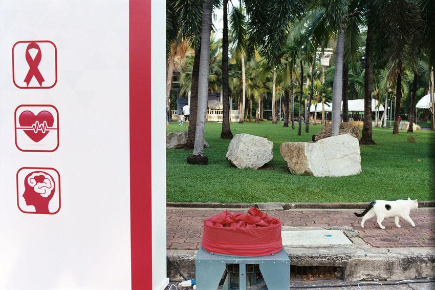 35mm Film Aids Animal Brain Buyfilmnotmegapixels Cat Cliche Everybodystreet Filmisnotdead Heart Ishootfilm Streetphotography Streetstyle Streetwithoutpeople The Street Photographer - 2017 EyeEm Awards