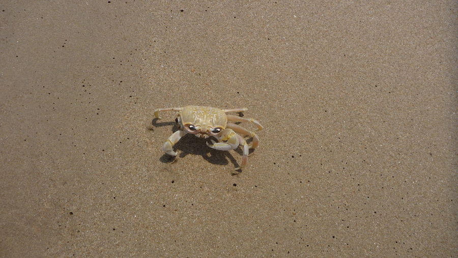 Animal Animal Themes Beach Beauty In Nature Crab Elevated View Nature Outdoors Animal Photography Animals