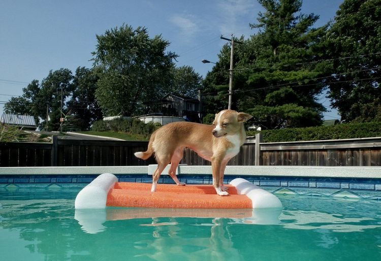 View Of Dog In Swimming Pool