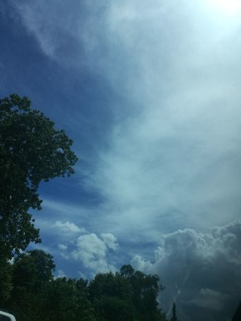 Leicap9 Tree Nature Sky No People Cloud - Sky Outdoors Blue Day Low Angle View Forest Beauty In Nature Power In Nature
