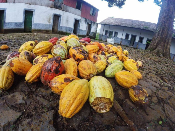 Sao Tome And Principe Travelingtheworld  Paciencia Food Cocoa Colorful Gopro Photography Travel Photography