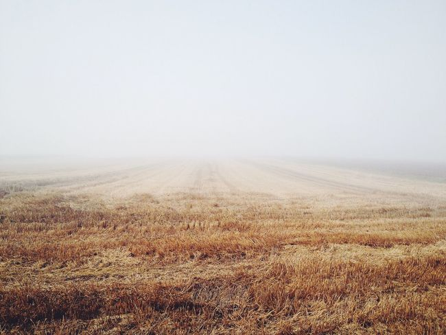 Chartres Fog Fields Nature