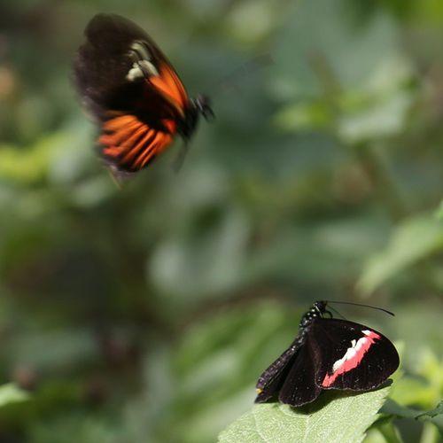 Canarias Canaryislands GranCanaria SPAIN испания канары гранканария island остров бабочки