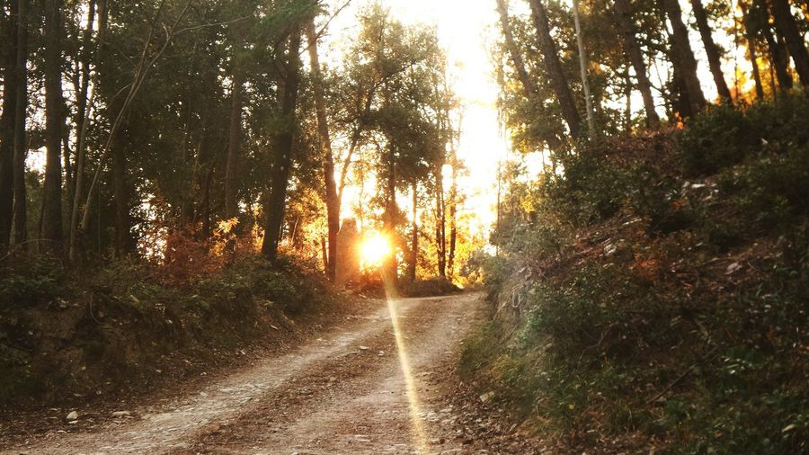 Road Trees Sun