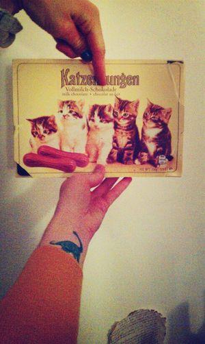 Katzenungen