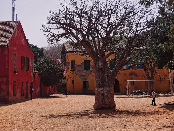 Goree Island, Senegal Architecture Baobab Tree Bare Tree Building Building Exterior Built Structure City Day House Men Nature Outdoors People Real People Residential District Senegal Sky Tree Village Village Life