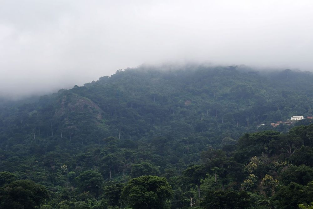 Forestphotography Fog Environmental Conservation Nature Mountain Landscape Travel Tree Tropical Climate Cold Temperature Forest Grass Beauty In Nature Forest Green Nature Foreat Street Food Forest View Foreat Hills Mountain View Mountain_collection Mountainview Green Nature Tree MonkeyForest