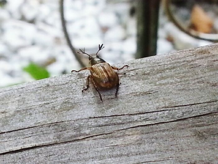 Insect With 3 Antanauy First Eyeem Photo
