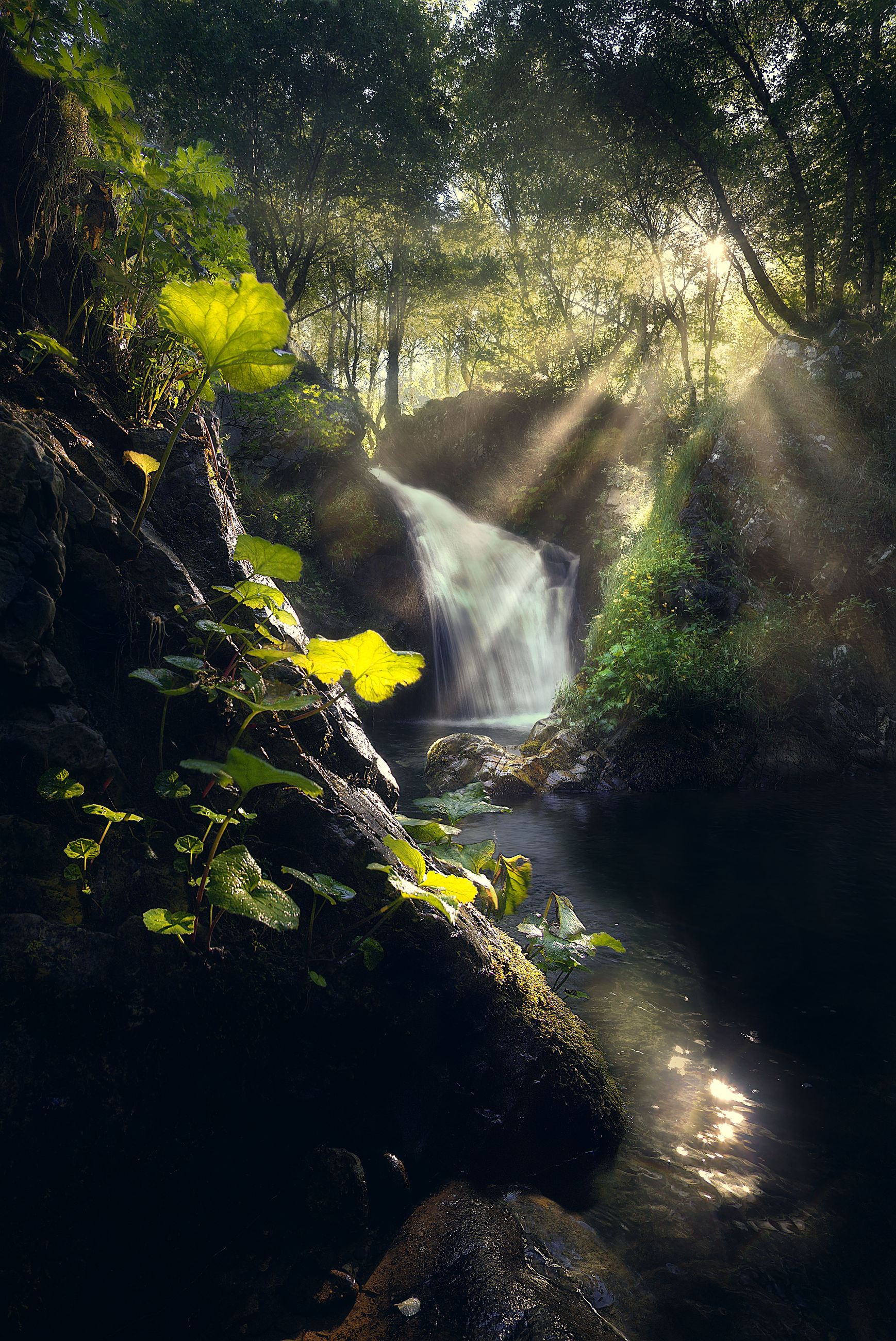 SCENIC VIEW OF WATERFALL ON ROCKS IN FOREST