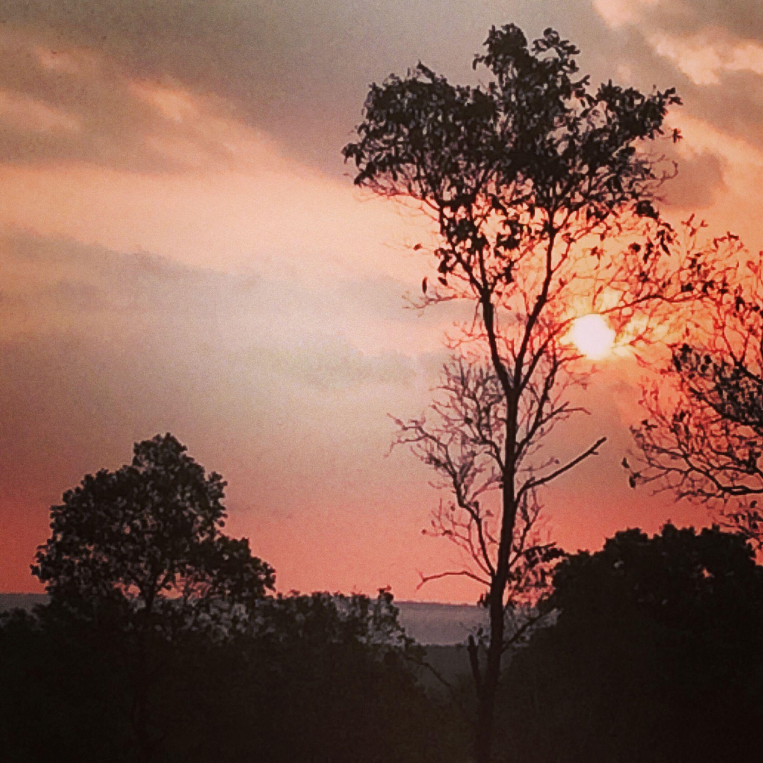 sunset, tree, silhouette, sky, beauty in nature, scenics, tranquil scene, tranquility, sun, orange color, cloud - sky, nature, idyllic, growth, branch, sunlight, cloud, dramatic sky, outdoors, non-urban scene