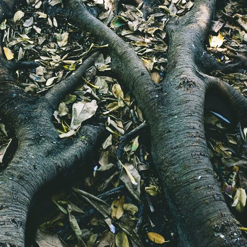 The roots of a