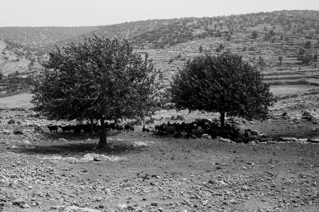 Edge Of The World Photography Turkey Documentary Blackandwhite Social Photography Streetphoto_bw Mardin Landscape landscape nearby the Monastery of St. Gabriel, Dayro dMor Gabriel in the southeastern province of Mardin. Monochrome Photography