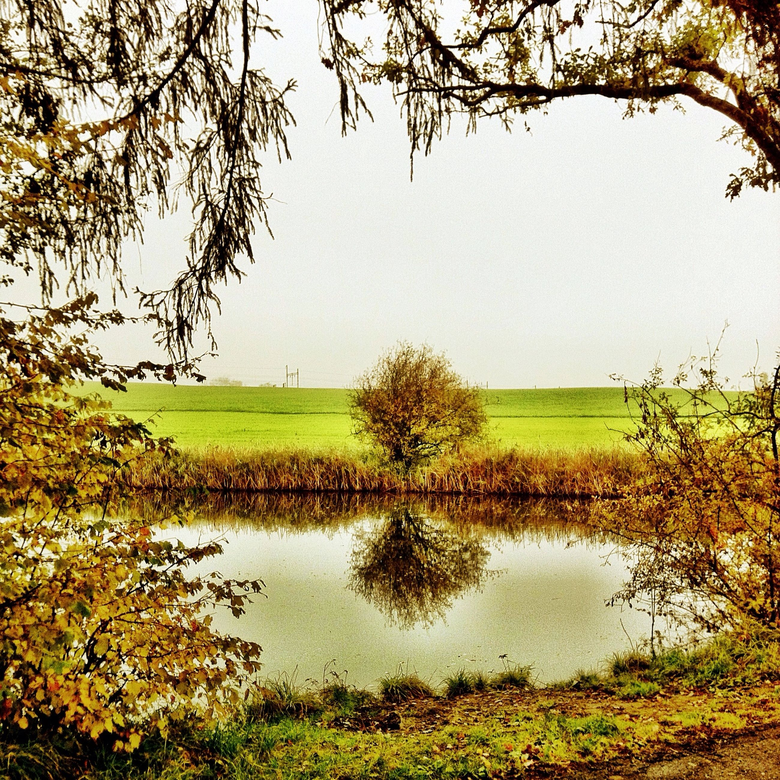 tranquil scene, tranquility, grass, water, clear sky, scenics, beauty in nature, tree, nature, growth, lake, landscape, reflection, field, green color, idyllic, plant, branch, sky, grassy
