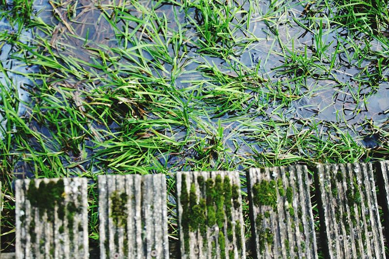 Nature Grassland Green Forestwalk Water Reflections Lake