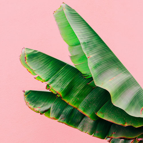 plants on pink concept. palm