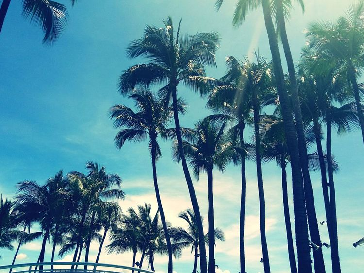 Coconut tree Beauty In Nature Tree Palm Tree Nature Low Angle View Sky Growth Travel Tree Trunk Social Issues Tranquility No People Blue Forest Leaf Outdoors Branch Day Travel Destinations Scenics First Eyeem Photo