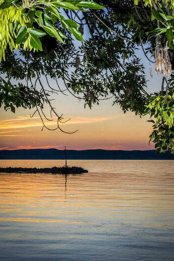 Colorful sunset at lake. Vivid sky through tree branches on summer evening at lake Balaton, Hungary. Gold Silhouette Travel Tree Vivid Beauty In Nature Blue Branch Colorful Evening Horizon Lake Landscape Nature Orange Color Outdoors Reflection Silhouette Sky Summer Sunset Tranquil Scene Tranquility Tree Water