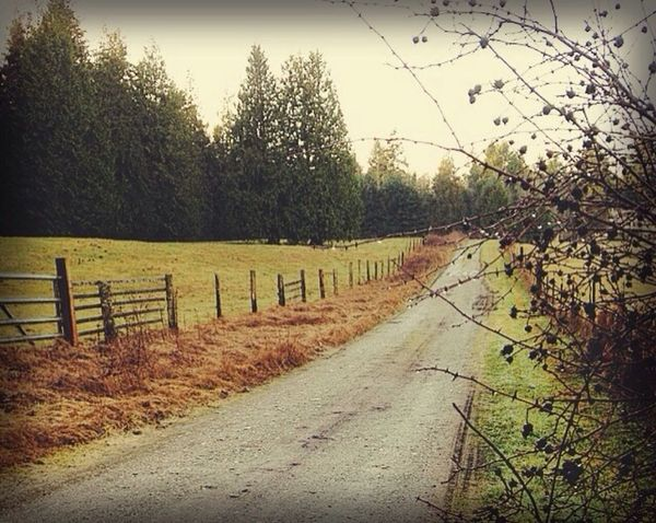 Road to the Farm Vintage Sunset Trees Port Townsend Nature Field IPSLandscape Landscape Road Landscape_Collection