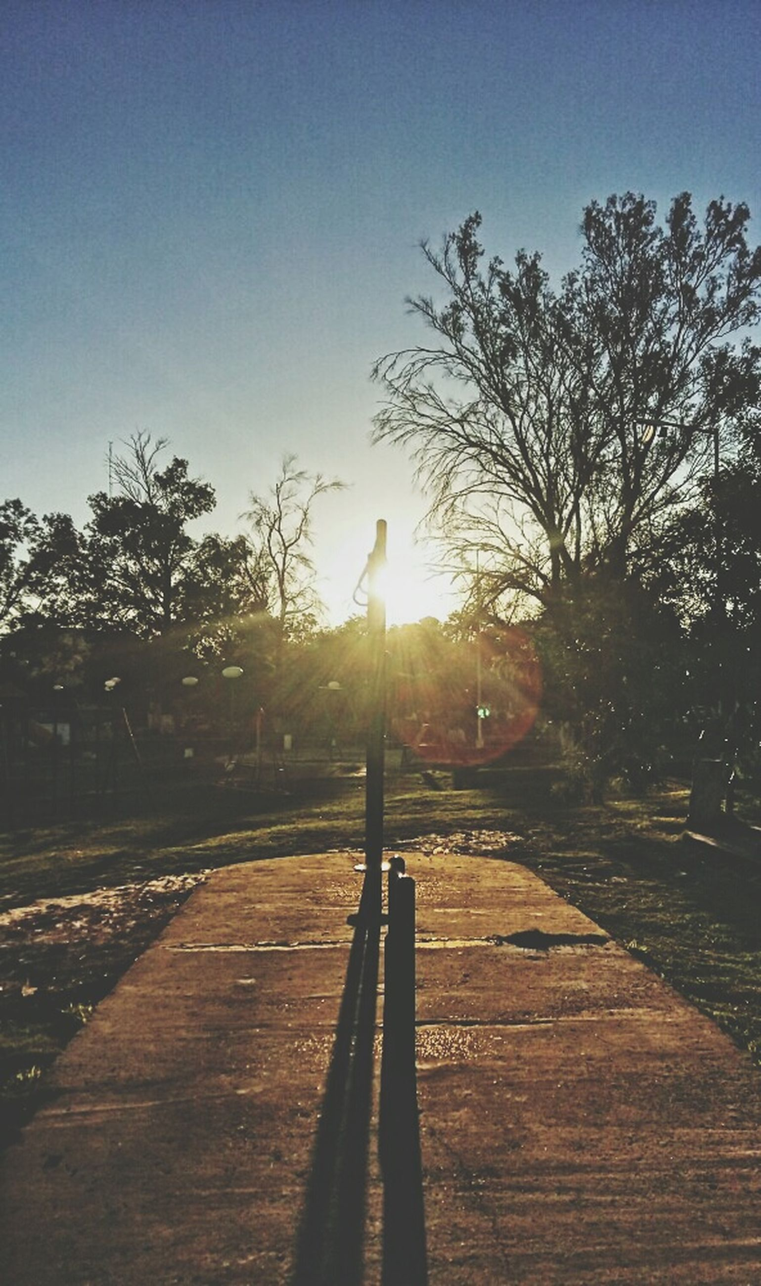 sun, tree, sunlight, the way forward, sunset, sunbeam, clear sky, lens flare, tranquility, tranquil scene, sky, shadow, nature, silhouette, transportation, road, diminishing perspective, empty, landscape, vanishing point