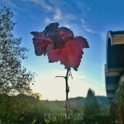 Plants Droidography TheMinimals (less Edit Juxt Photography) Quotes Norcal AMPt-Android Winery DroidEdit Through My Eyes