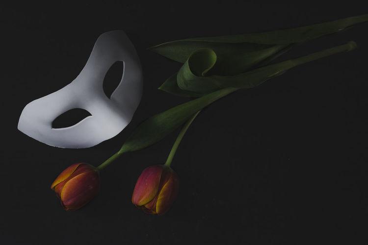 #Dark #white Mask #eyembestshot #EyeEm #masquerade #Mask #Tulips #stilllife #moody #moodytones Black Color Studio Shot Day