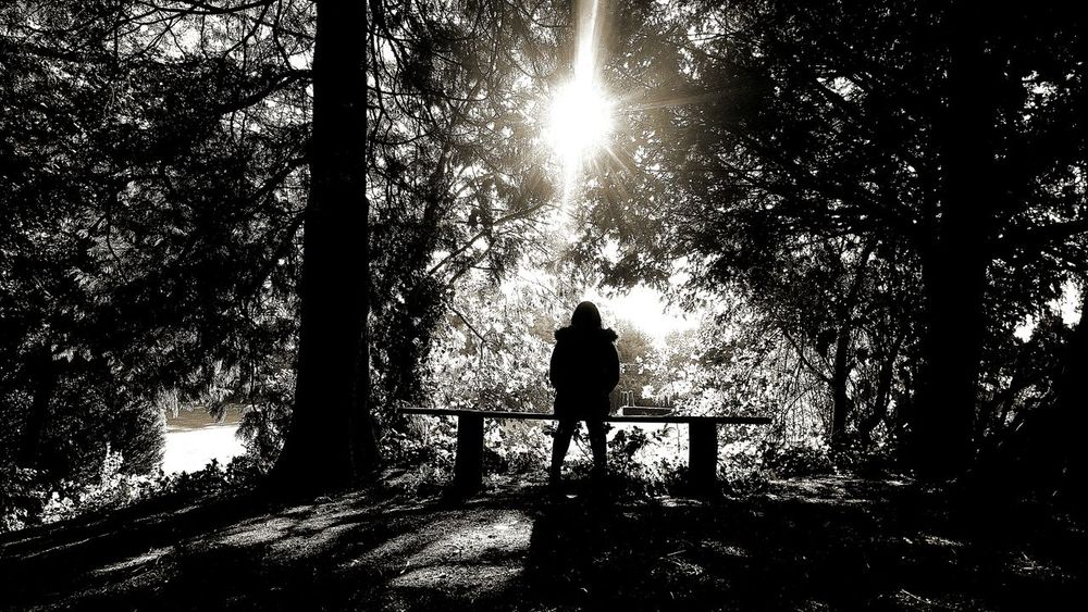 Lost in the woods Lostinthewoods Blackandwhite Forrestlighting Sunshiningthrough Benchinthewoods Bench Sunlight Creepy Aesthetic Girl On A Bench Winter Silhoutte Woods Silhoutte Silhoutte Photography