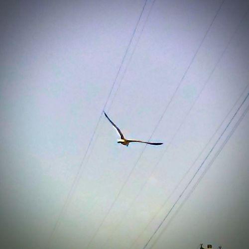 Flying Day