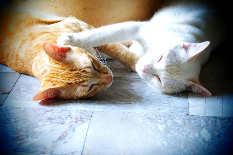 Cats Cat♡ Cat Lovers Sleeping Sleeping Cat Relaxing Relaxing Moments First Eyeem Photo