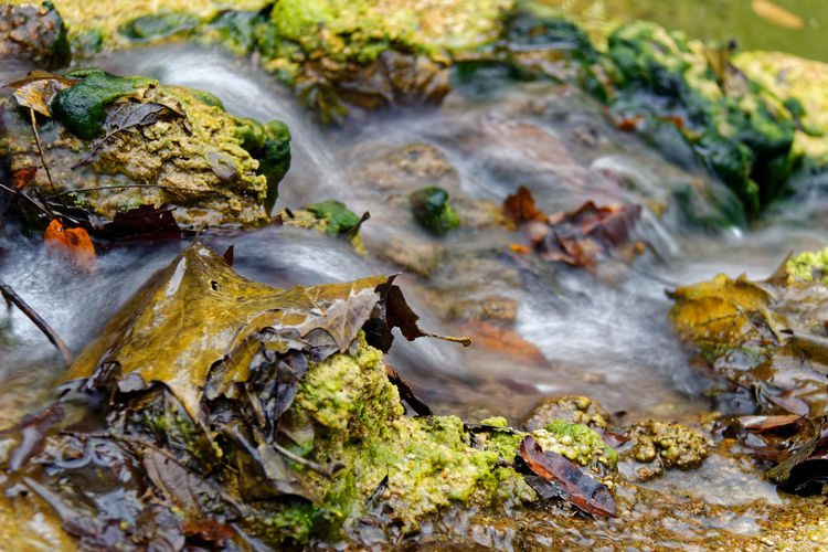 Close-up of stream flowing through mossy rocks