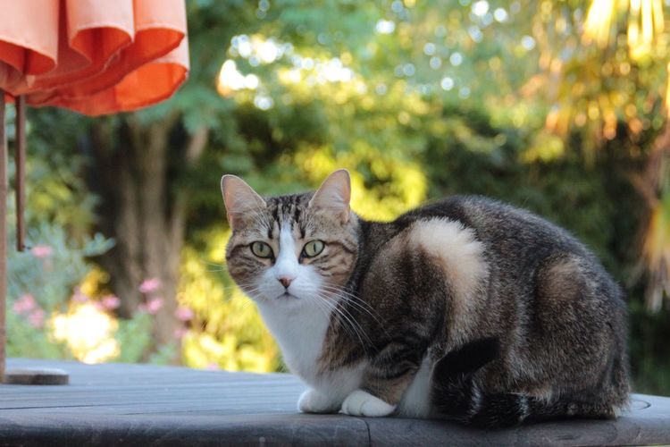 Portrait of cat sitting on table outdoors