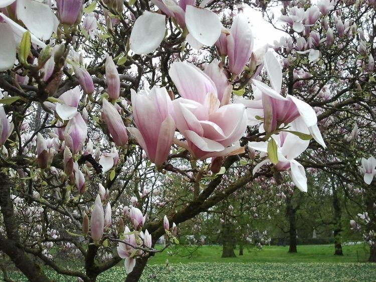 Magnolia Park Springtime