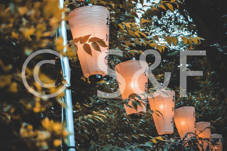 Close-up of illuminated lighting equipment on tree