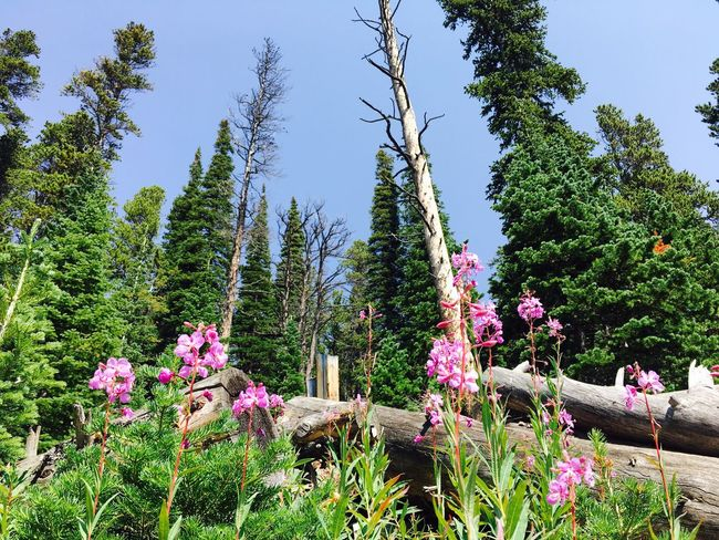 Growth Tree Nature Flower Beauty In Nature Plant Day Outdoors Green Color No People Sky Scenics Colorado Rosevelt National Forest