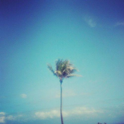 Palm Tree Palmtreesinflorida Florida Beach