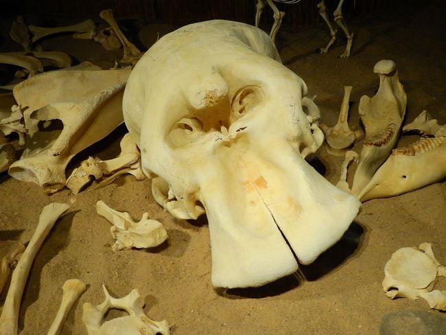 Animal Animal Body Part Animal Bone Animal Skeleton Animal Skull Animal Themes Animal Wildlife Animals In The Wild Bone  Close-up Fish Group Of Animals Indoors  Marine Nature No People Sea Underwater Vertebrate