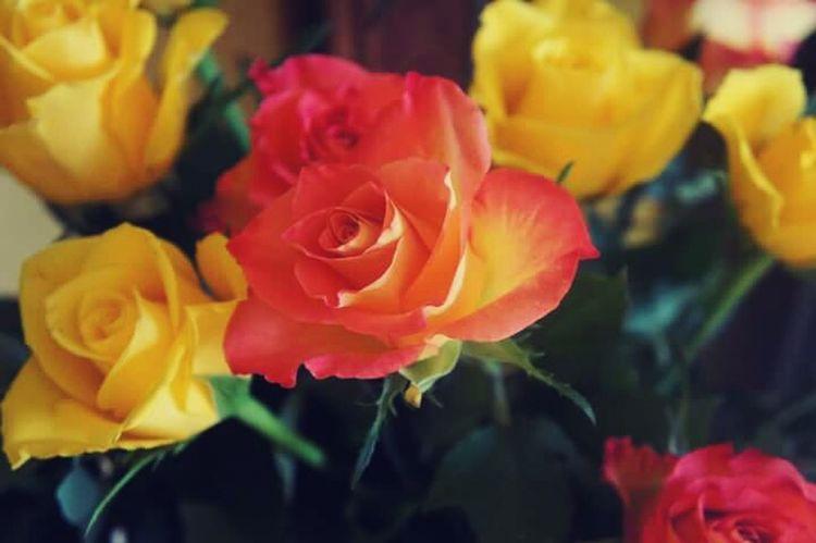 Rose🌹 LoveFlowers🌸 MyBoy Enjoying Life Lgg4photography Kochamgo Ilovehim♥ Miłość Love Truelove