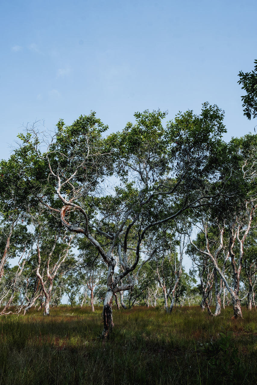 TREES IN FIELD AGAINST SKY