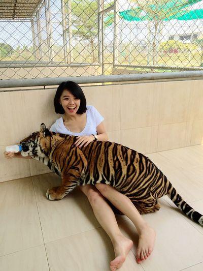 Feeding  Tiger Baby Cute