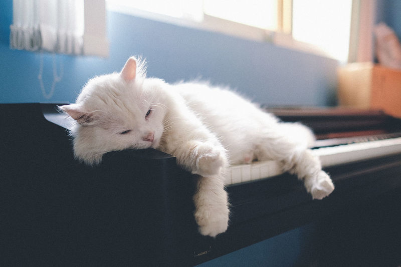 Close-Up Of White Cat Resting On Piano At Home
