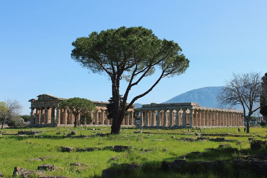 The Tree Abd the temple Paestum Cilento Italy Temple Architecture Plant Tree Sky Growth Green Color Field Architecture No People