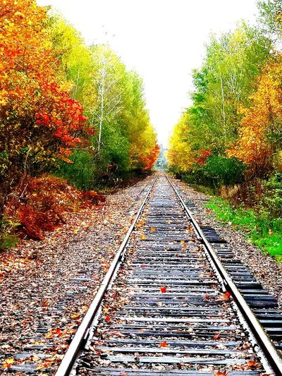 Railroad Track The Way Forward Nature Tree Beauty In Nature Outdoors No People Sky Straight Railroad Tie Lost In The Landscape